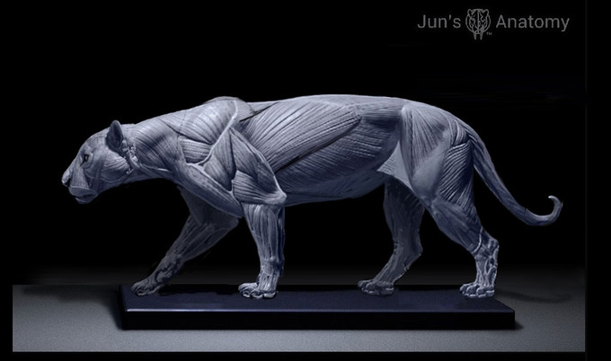 Jaguar Anatomy Model, this is a WIP final pose maybe different than what's being presented here.