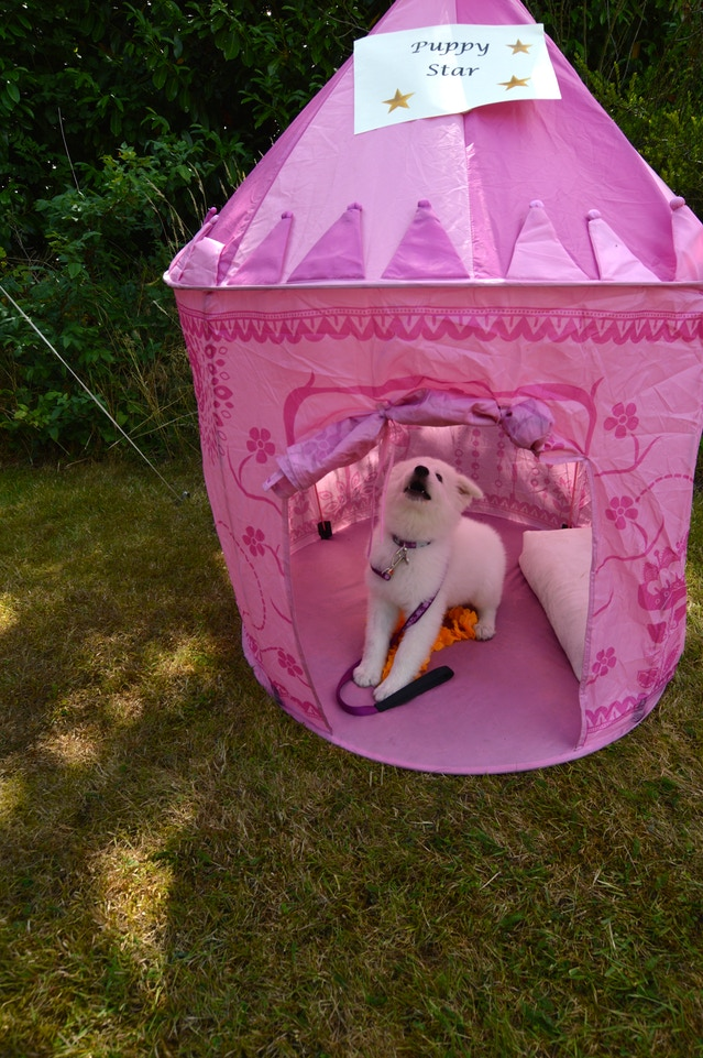 Enjoying her special tent!