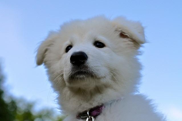 Puppy Star Immy