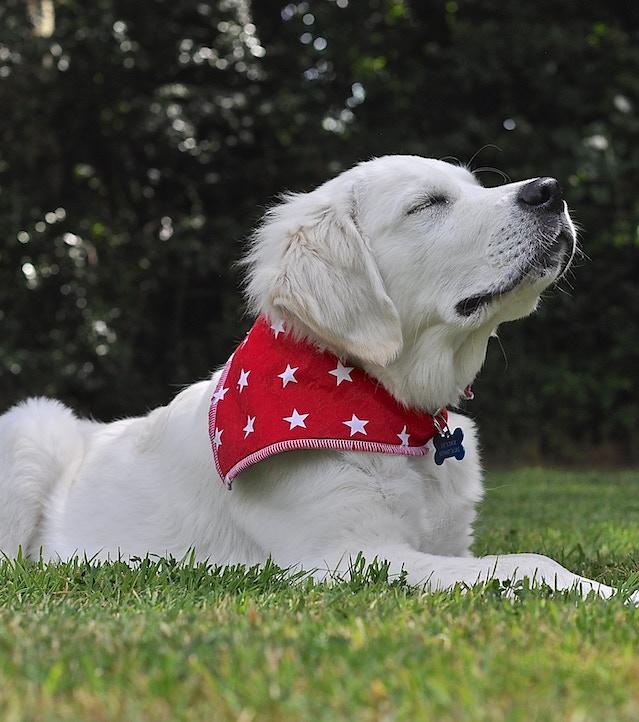 Puppy friend Dexter, chillin!