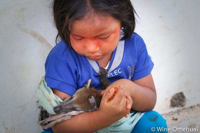 A Waorani girl sits behind her school holding a baby cuchucho that her parents brought home after hunting the animal´s mother to provide food for the family in their community of Dikaro.