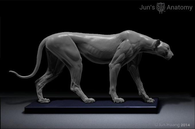 Cheetah Anatomy model surface anatomy