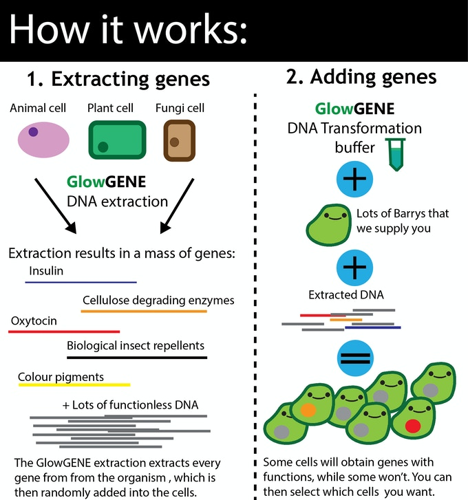 A more complex explanation! (We know we didn't include ligases and restriction enzymes in the diagram)