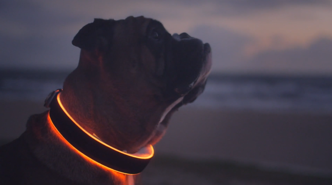 Buddy will automatically activate a hazard pattern when your dog has left the geofence.