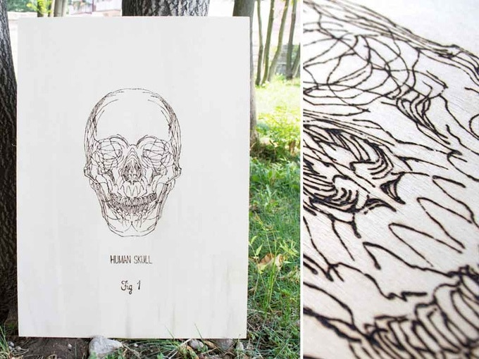 Human Skull - Fig.1 from Skulls Series by Francesca Padovan