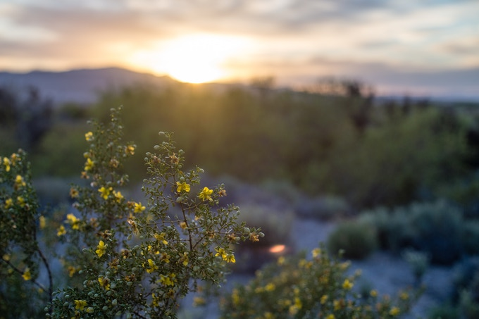 Creosote Sunset