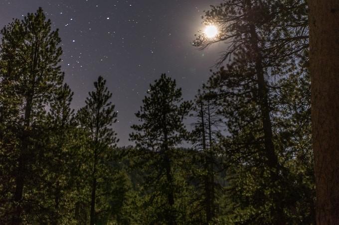Hidden Forest at Night
