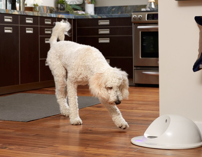 CleverPet is a connected platform that lets you provide the mental stimulation your dog craves, even when you can't be there.