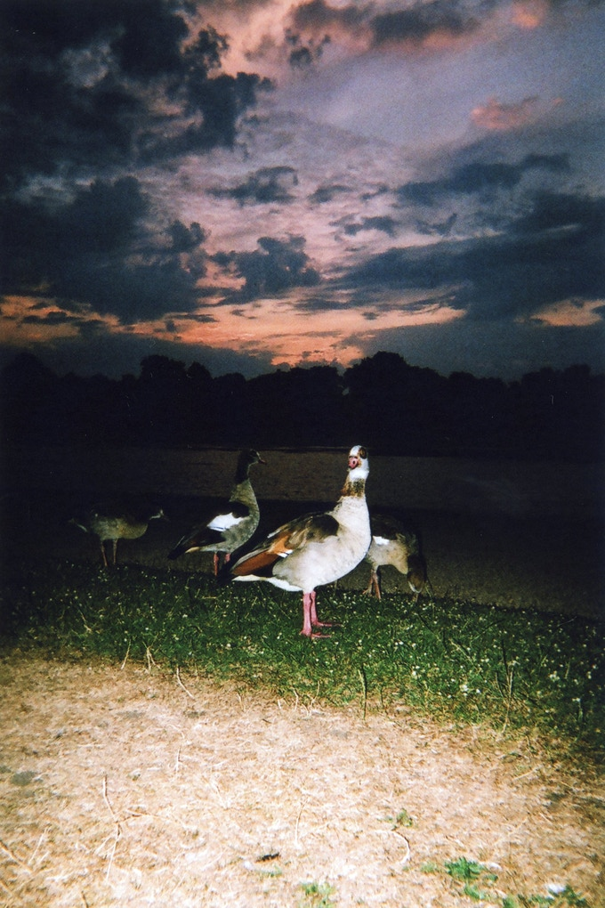 AUGUST 2016: Royal Geese Sunset, Kensington Gardens, by Maciek Walorski.