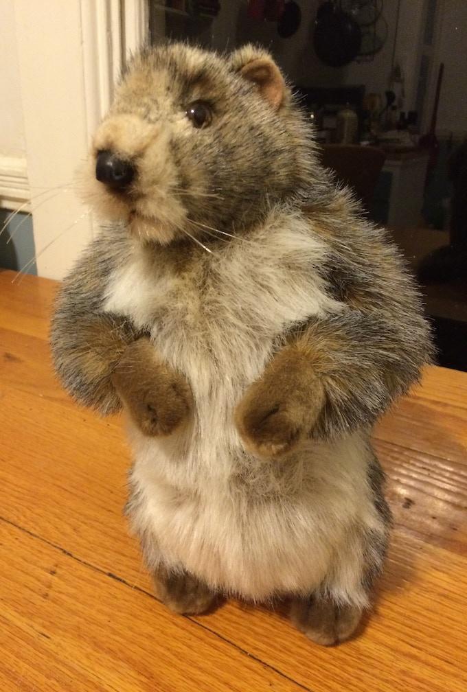 Horatio the stuffed toy marmot