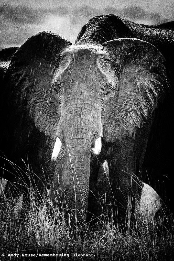 Mara Showers - canvas donated by Andy Rouse