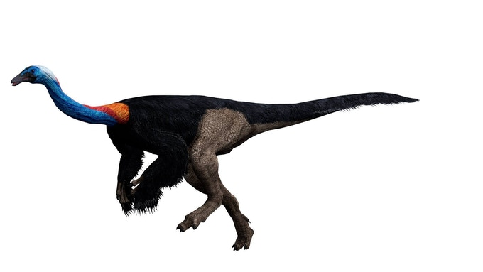 feathered gallimimus