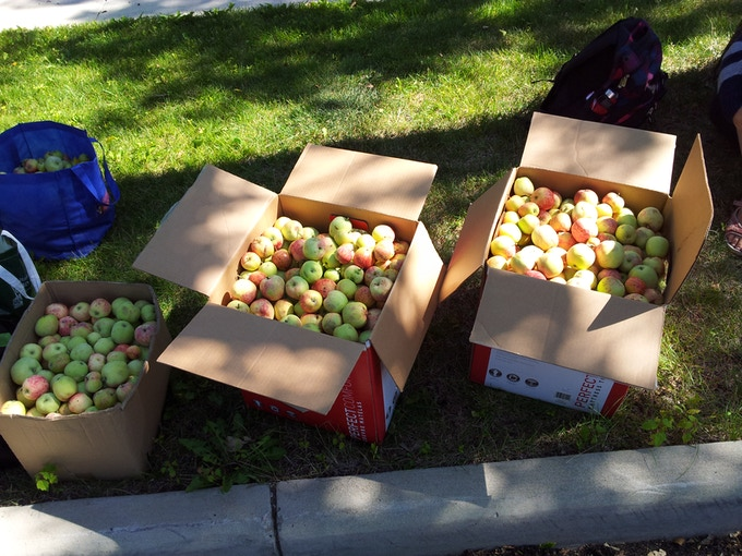 Locally grown apples.