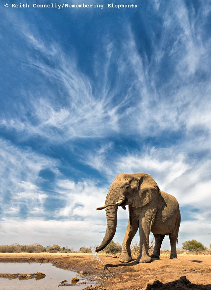 'Whispy Elephant' print donated by Keith Connelly