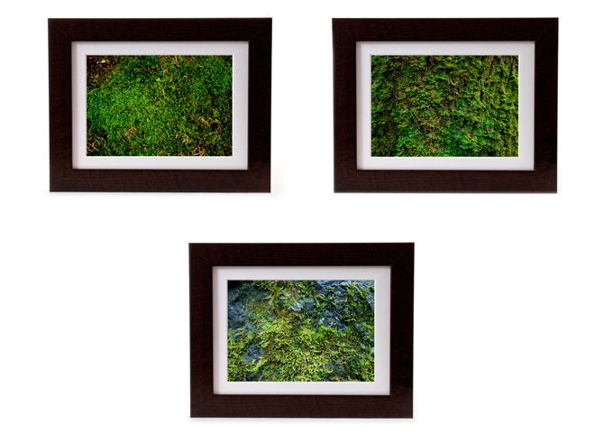 Bring a touch of the Northwest to your wall with a print of one of the background photos used in the first three issues. Available to ART LOVER level backers, or as an add-on to any level for $75. Estimated print size 7 x 10 inches (frame size TBD).
