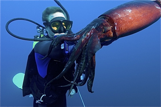 Underwater cinematographer Pearson, up close & personal with a giant humboldt squid in the Sea of Cortez.