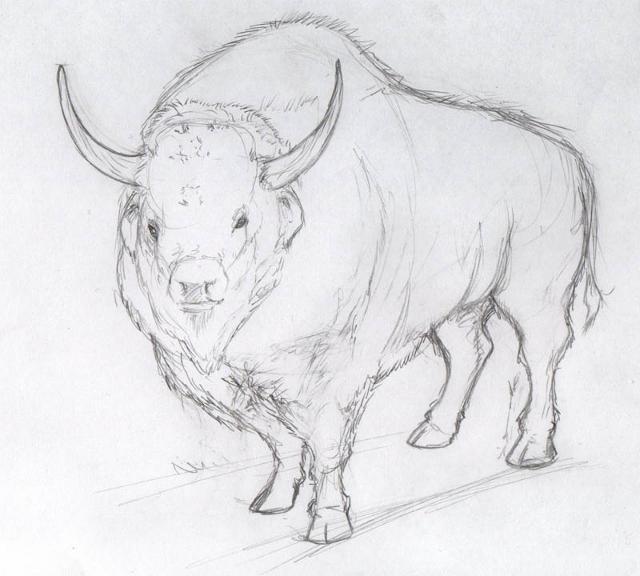 Bison priscus