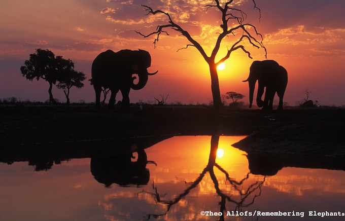 'Elephants at Watering Hole', print donated by Theo Allofs