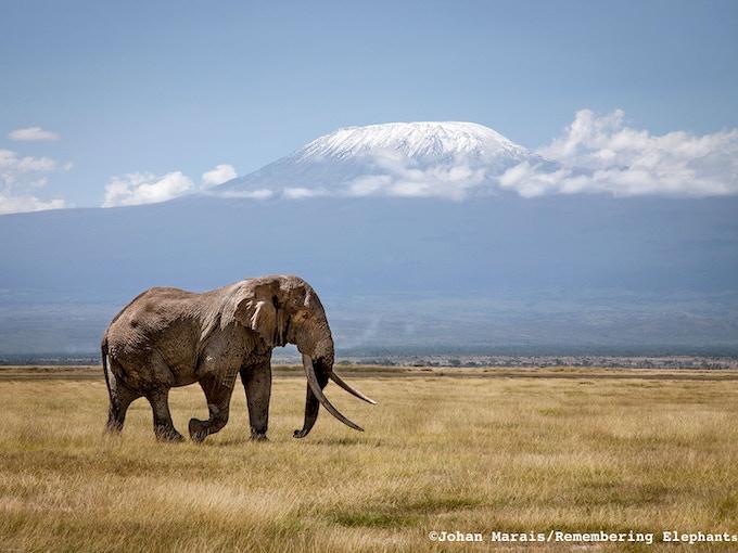 'Tim at the foot of Kilimanjaro', donated by Johan Marais