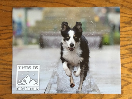 2016 Limited Edition Dog Poster