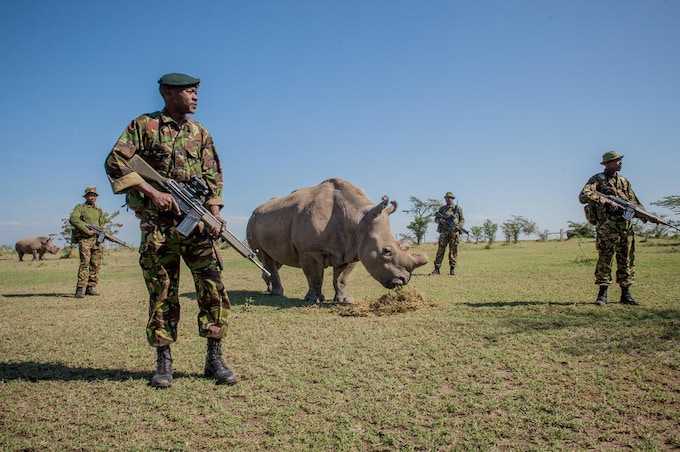 Corporal Simon Irungu and his platoon of armed Kenyan guards watch over Sudan, one of the last four Northern White Rhinos in the world (photo by Ami Vitale)