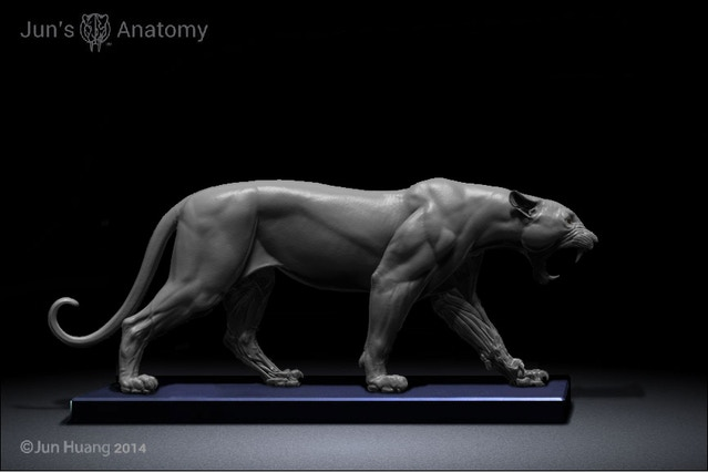 Jun\'s Anatomy Big Cats Anatomy models by Jun Huang — Kickstarter