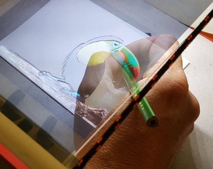 Let's draw a toucan! / Dessinons un toucan !