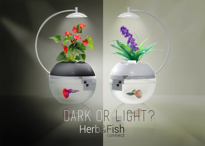 Herb fish connect smartly designed by arky design for The perfect kitchen menu