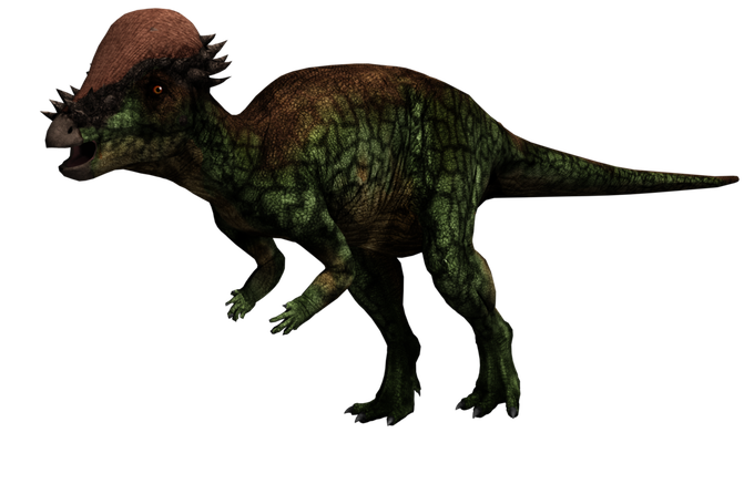 Evergreen pachysaurus