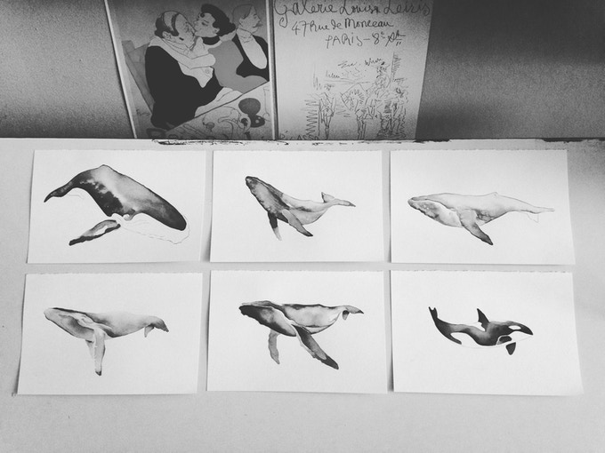 whale studies