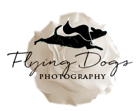 Review: Flying Dogs Photography