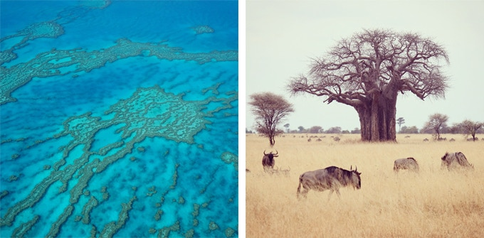 Left : Great Barrier Reef (Australia)   Right : Wildbeests in the Savanna (Tanzania)