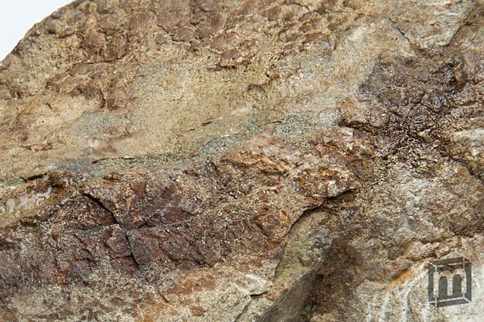 """""""Most of what is known about the morphology and taphonomy of dinosaur skin comes from several exceptionally preserved hadrosaurid fossils."""" ~ Matt Davis, Department of Geology and Geophysics, Yale University"""
