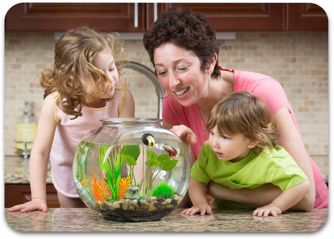 GravityFlow2 is the fun, hassle free way to have a pet! Cleaning is a breeze and kids love watch the GravityCean system work its magic!