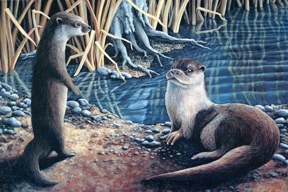 """Otters at the Water's Edge"" is available in two sizes. The smaller is 11"" x 14"" and the larger is 15"" x 25."" Both are signed and numbered on high quality paper."