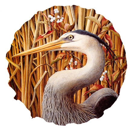 "Heron with Red Osier Dogwood is available in two sizes. The round image is printed onto  11"" x 14"" and 18"" x 18"" quality paper, signed and numbered."