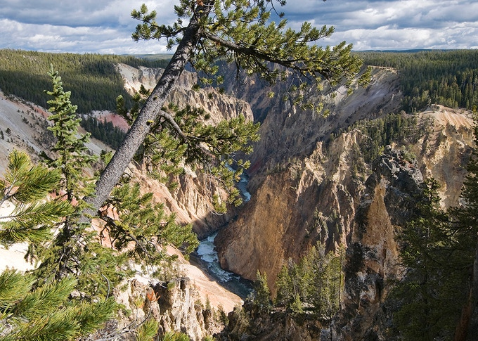 A pine tree bisects the scene from where Jackson made this photograph looking down the Grand Canyon from near the Grand View overlook on the west side of the canyon.