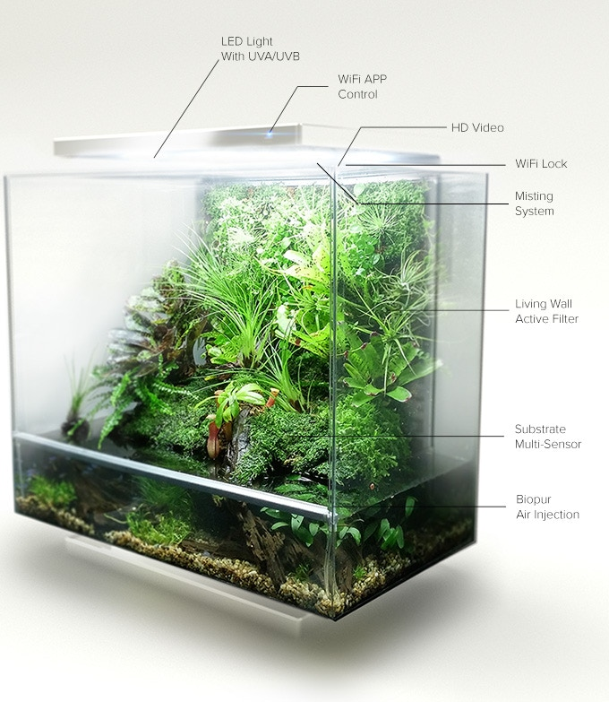 Ecological Succession 0 further Ultimate Guide To Terrariums besides How Birds Are Like Islands For Lice together with 201358748 Rizosphere Symbiosis moreover Habitats. on micro habitat