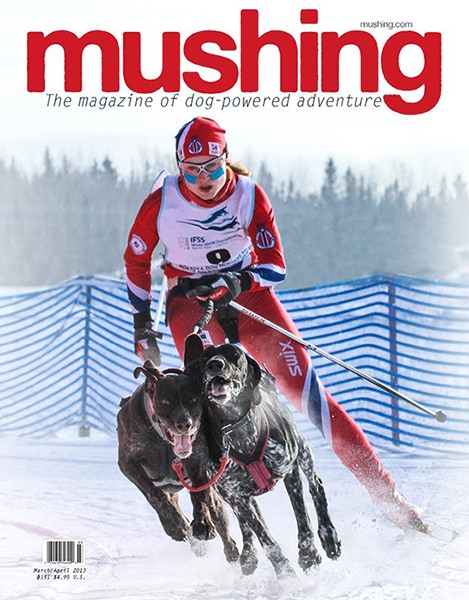 Norweigan Skijor World Champion Yvette Hoel, racing her two 'Greyster' hybrid sled dogs, earned the first ever skijor feature in Mushing Magazine after her incredible performance at the 2013 IFSS Winter World Championship in North Pole, Alaska.