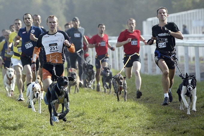 Originating in Europe as off-season training for the mushing community, canicross has become popular as a stand-alone sport all over the world. This event was sponsored by Canicross Hungary.