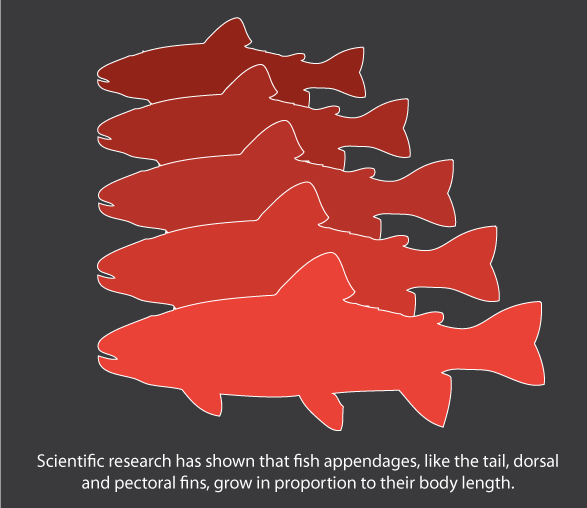 Highly Proportional Growth in Fish