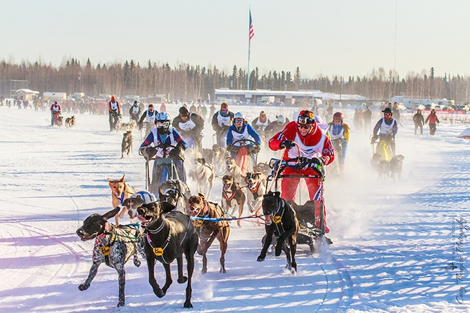23 time IFSS World Champion Lena Boysen Hillestad from Norway takes the lead during the four dog mass start sprint race at the 2013 Winter World Championship in North Pole, Alaska.