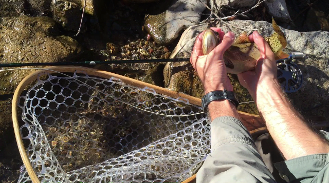 Flopping Fish Using Rod to Measure