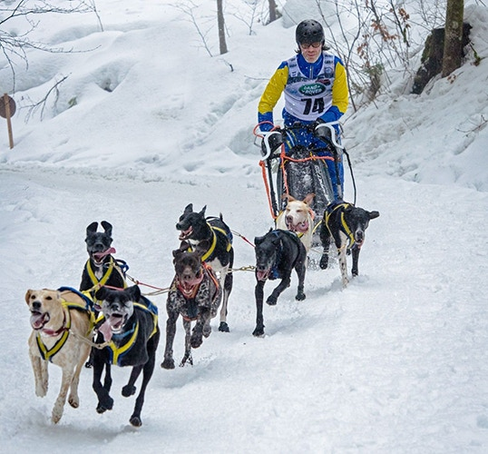 Champion Swedish musher Lars Lindh stepped up and raced the team of Taina Teras at the 2015 IFSS Winter World Championship in the Black Forest of Germany.