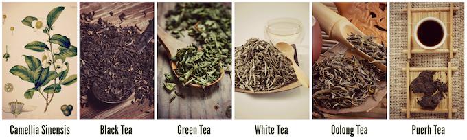 Camellia Sinensis & 5 Main Types of Teas