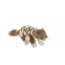 In need of protection - the Quoll