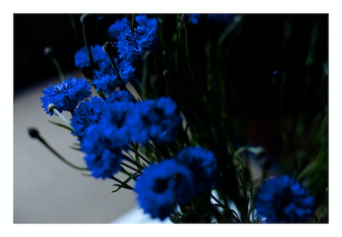 SIGNED LIMITED EDITION 'CORNFLOWERS' PRINT