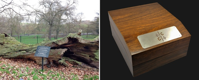 The famous Queen Elizabeth's Oak in Greenwich Park and the external view of the GTG wood pack box