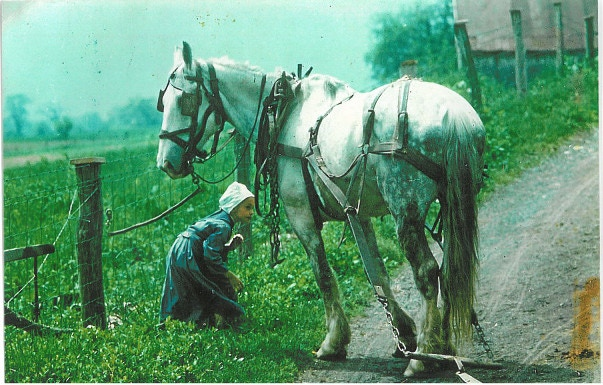 """""""Minding the Horse""""--Little girl without bonnet is part of the Oldest of the Old Order Amish in Big Valley, Pa."""