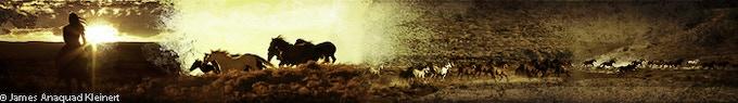 Wild Horse Warrior